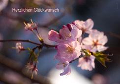 Glückwunschkarte, Geburtstag, Fotokarte, Apfelblüten, Obstbaumblüten