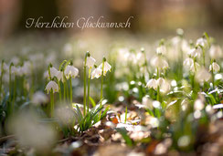 Glückwunschkarte, Geburtstagskarte, Sonnenblume, Fotokarte