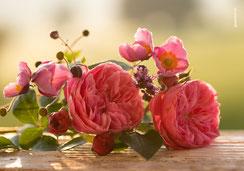 Glückwunschkarten, Geburtstagskarten, Fotokarten, Rosen, Romantische Rosen