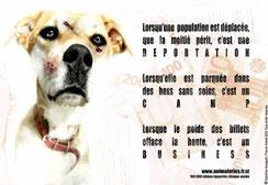 N'achetez jamais de chien dans une animalerie