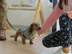 横浜のパピーパーティーで子犬の社会化