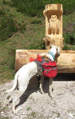 Beim alten Geschirr rutschen die Taschen meist zum Hals des Hundes