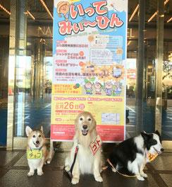 2018.8.26 いってみぃひんサマーカーニバル(於 奈良ロイヤルホテル)