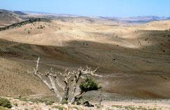 22 - Méfaits des troupeaux par destruction de la strate végétale, compaction du sol puis asphixie radiculaire