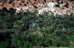 Biotope oasien, Pays des Ida-Outanane, Haut Atlas