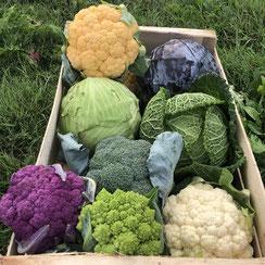 Chou-fleur et brocoli à déguster en automne producteur les saveurs de Gâtine