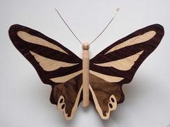 Papillon PPA_1601 - Ailes marquetées sur les 2 faces