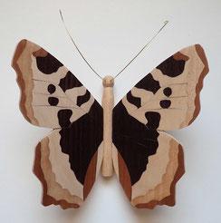"""Papillon modèle """"Petite tortue"""" PPT_2011"""