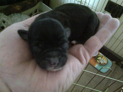 Tiny Puppy in Gerald Smythe's hand. Author of Lilly and Six, Jack, Lilly and Friends.