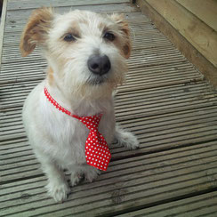 Proud and handsome Jack posing in his little polka-dot tie. Jack, Lilly and Friends picture book series.