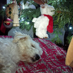 Lilly under the Christmas Tree, waiting for Santa and her six tiny puppies. Jack, Lilly and Friends