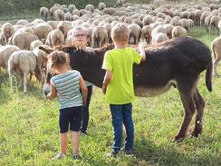 LBV Umweltbildung in Franken Jura Schafe Artenvielfalt