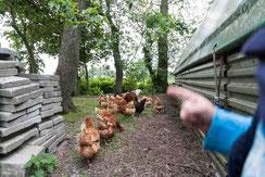 Finger deutet auf Hühner