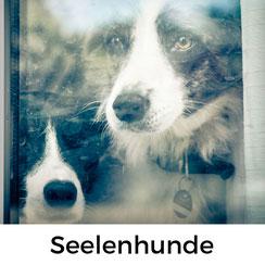Ben und Idgie, meine Seelenhunde und die Seele von chienNormandie