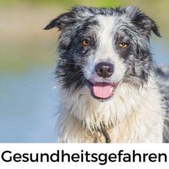 Urlaub mit Hund in der Normandie: Gesundheitsgefahren für Hunde