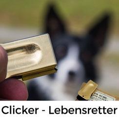 Hundesport-Geschichte: Wie der Klicker zum Lebensretter wurde