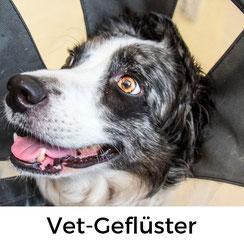 Vet-Geflüster - Idgies tierische Leidensgeschichte aus dem Sommer 2018