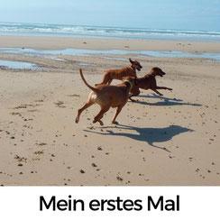 Mein erster Hundeurlaub in der Normandie