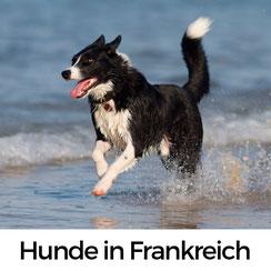 Urlaub mit HUnd in der Normandie: So unterscheidet sich Hundehaltung in Frankreich von der in Deutschland