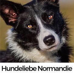10 Grü+nde, warum Hunde die Normandie lieben