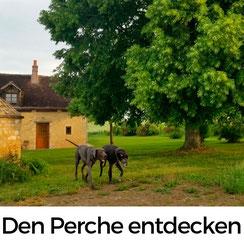 Den Perche in der Orne mit Hund entdecken