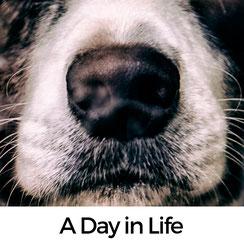 A Day in Life – Alltag mit HUnd in Frankreich
