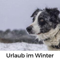 Urlaub mit Hund in der Normandie: Darum ist der Winter eine fantastische Reisezeit für den Urlaub mit Hund