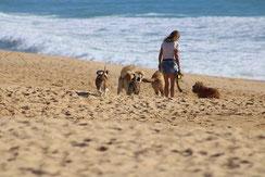 写真:数匹の犬と浜辺を散歩している女性