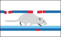 Rattenbekämpfung, Georg Mayer GmbH, Nußdorf