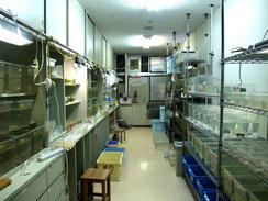 Breeding room