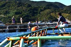 The fish tank at Shirigai in Ainan-town