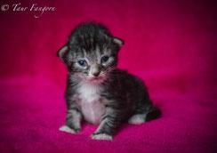 chaton a vendre