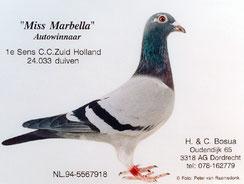 """"""" Miss Marbella"""""""