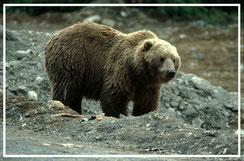 Reisefotograf_Sedlmayr_Alaska_1