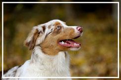 Fotogalerie-Fotograf-Juergen-Sedlmayr-Tierfotografie