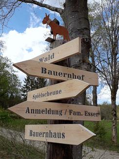 Bauernhofurlaub in der Eifel