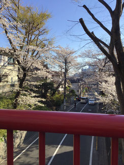桜橋中央から川崎市の方  向