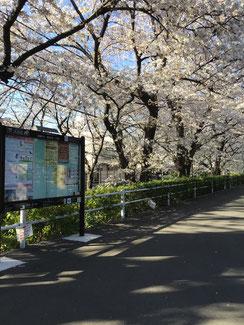 桜橋から嶺町出張所方向