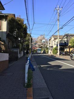 桜坂信号。 結構咲いているように見 えてウキウキ♪