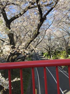 桜橋中央から嶺町出張所 の方向