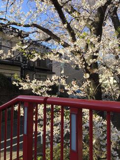 桜橋階段側