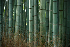 Bamboo Forest, 2017 © lonelyroadlover