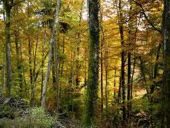 Im Wald La Vanoge