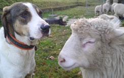 Tappo, mit Schaf Emma