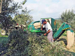 Kaltgepresstes Bio-Olivennöl aus Griechenland