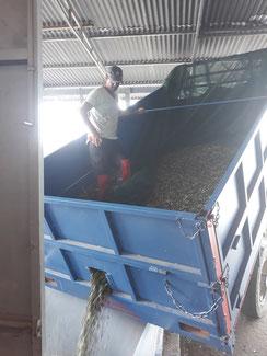Kaltgepresstes Bio-Olivenöl Extra Vergine aus Griechenland