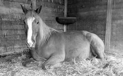 Pferden und anderen Tieren in Not muss geholfen werden. Dafür treten wir ein.