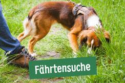 Hund sucht Fährte