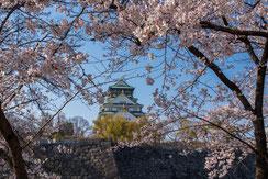大阪、春の陣,ぽせいどんさん,桜フォトコンテスト,2020,丸五賞