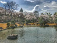 桜には和風庭園,nanumotoさん,桜フォトコンテスト,2020,常盤堂 雷おこし本舗賞